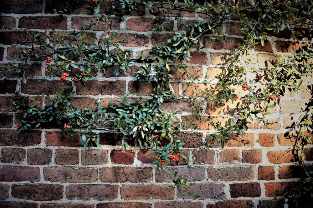 Vine on wall photo by Niharika Bandaru via Unsplash.com